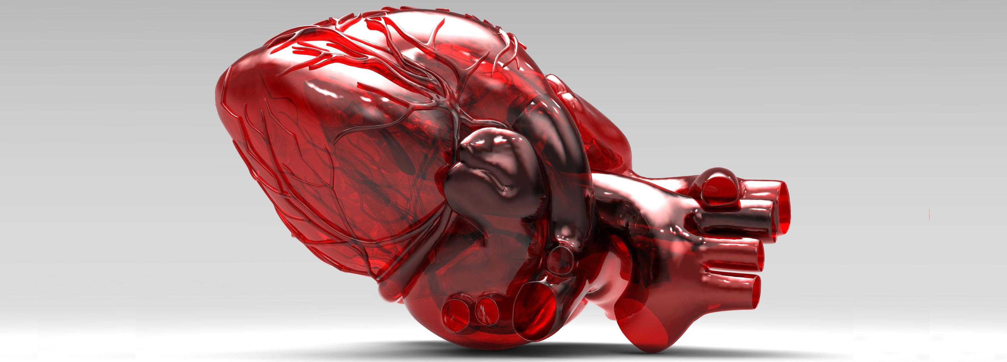 cuore stampato in 3d per settore biomedicale